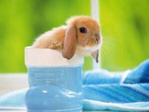 20_baby_animals (4)