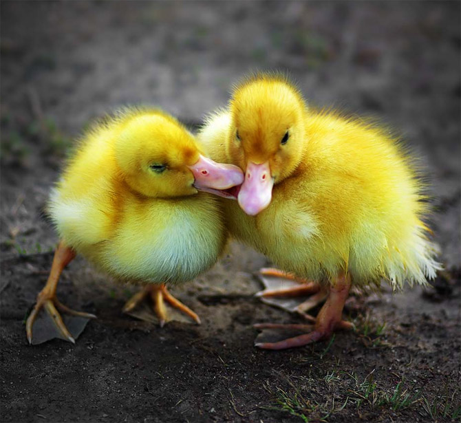sweetest_animal_kiss (5)