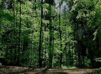 forest meditaiton (Custom)